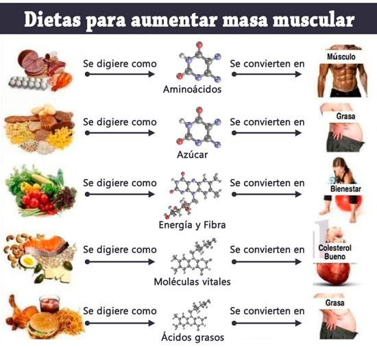 Dietas-para-aumentar-masa-muscular.jpg